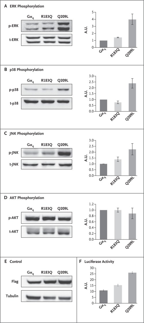 small resolution of effect of mutation on mapk signaling pathway