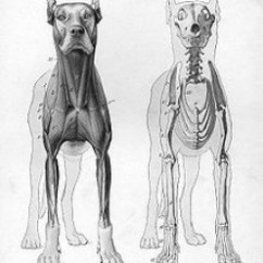 Bear Skull Diagram Crossover Wiring Speaker Nej Psi - Anatomie Psa