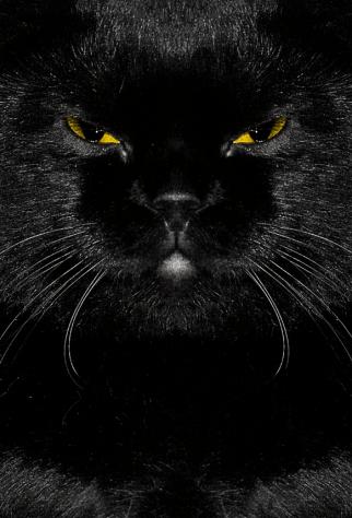 blackcat_selfie02