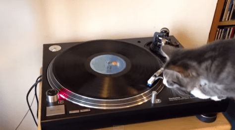 turntable_cat01