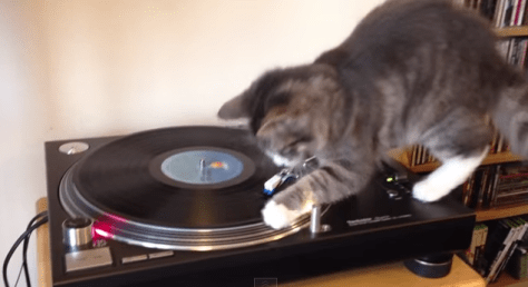 turntable_cat02