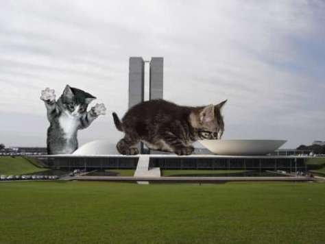 cat_architecture06