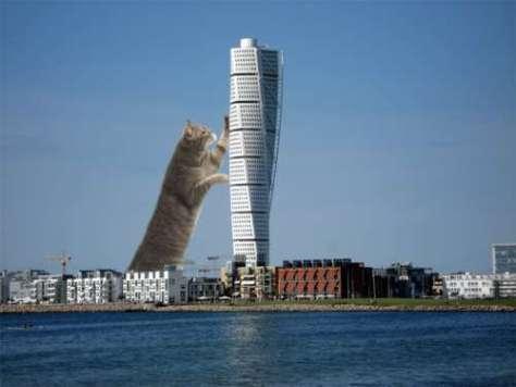 cat_architecture07
