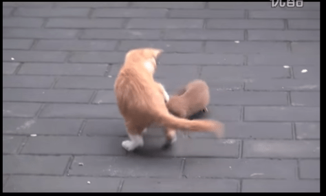 cat_weasel02