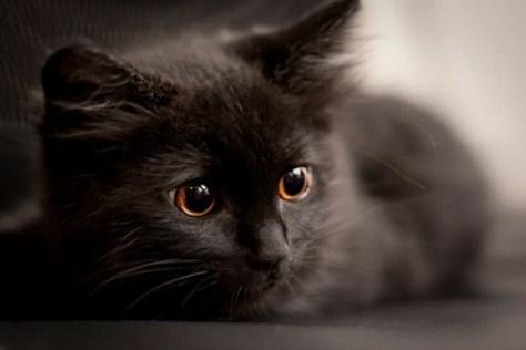 cats_eye03