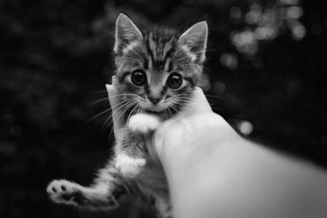 cats_eye04