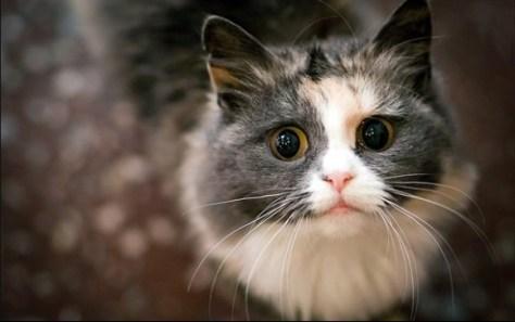 cats_eye08