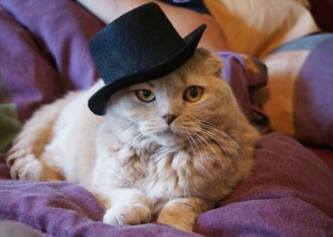formal_cat03