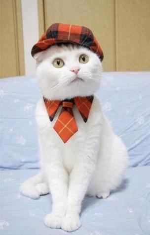 formal_cat06