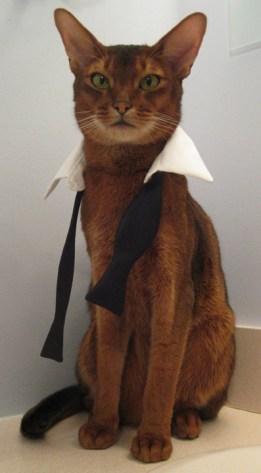 formal_cat10