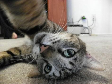 selfie_cat06