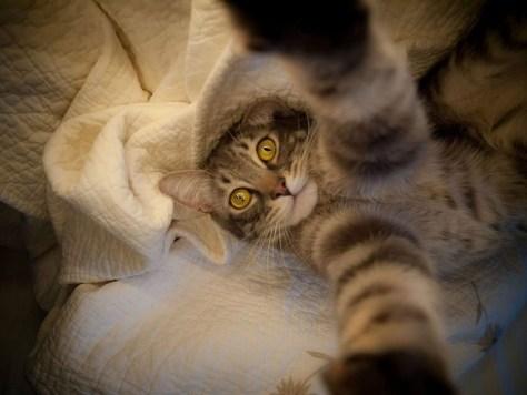 selfie_cat09