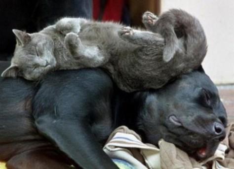 sleeping_cat02