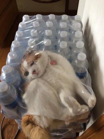 water_cat_12