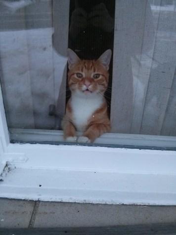 window_cat_07