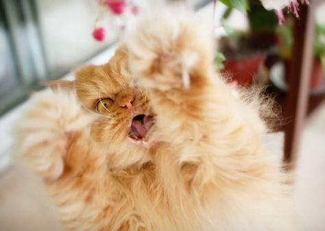 angry-cat-garfi11