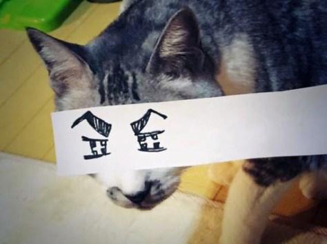 cat_anime_eye01