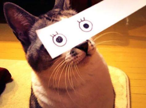 cat_anime_eye03
