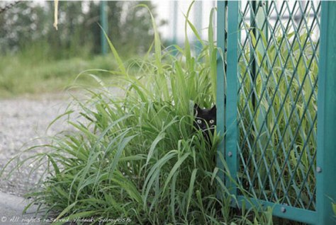 hide_and_seek_cat03
