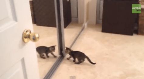mirror_cat01