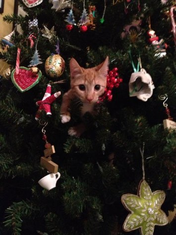 cat_christmas_tree06