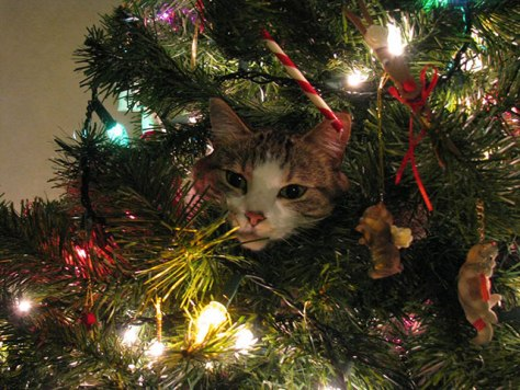 cat_christmas_tree07