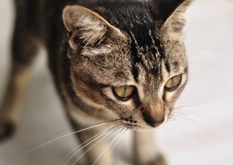 cat_name_2014_02
