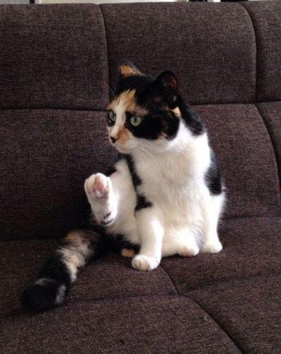cat_otabe02
