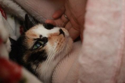 cat_otabe03
