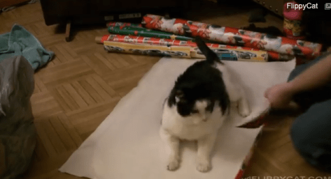 cat_wrapping03