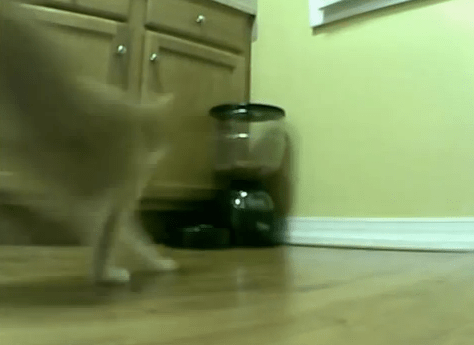 cat_vs_autofeeder01