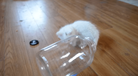 kitten_in_bottle08