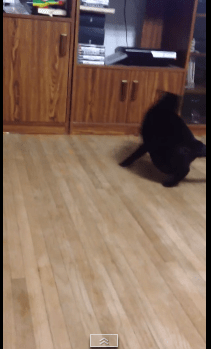 rolling_cat09