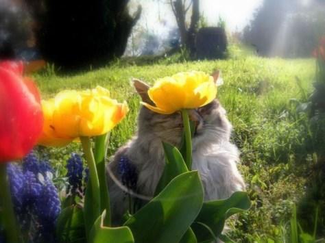 【猫画像】花キレイ・・・