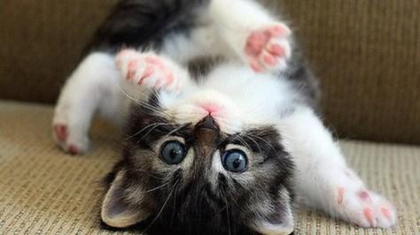 【猫画像】ゴロンッ