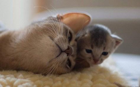 【猫画像】親子まったり