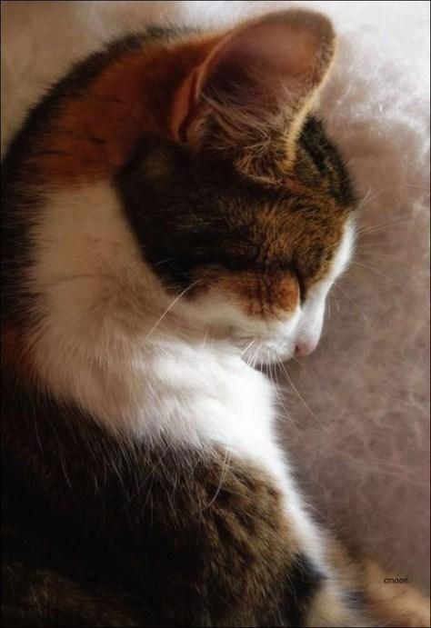 【猫画像】猫の横顔