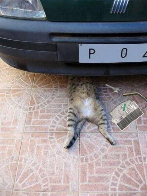 【猫画像】修理中