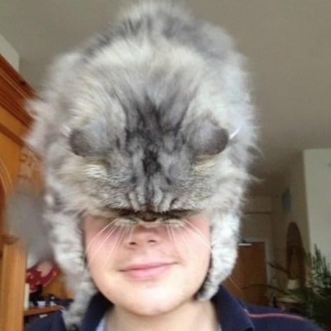 cat_hats10