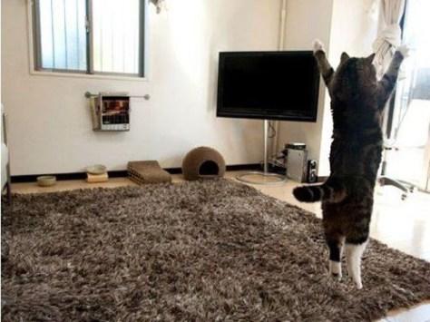 【猫画像】やった!晴れ!