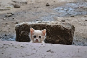 【猫画像】ドキドキ