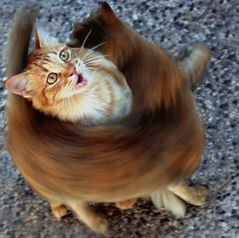 【猫画像】ハッ、早すぎて見えない!