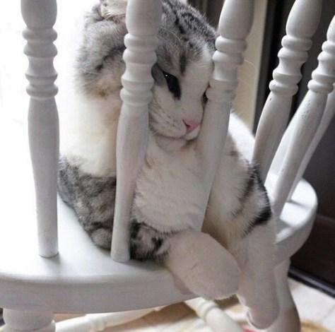 【猫画像】むぎゅう