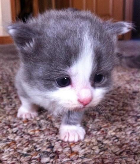 【猫画像】どアップ