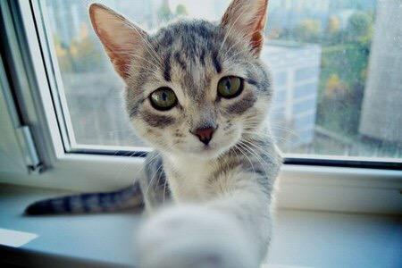 【猫画像】猫パンチされた瞬間