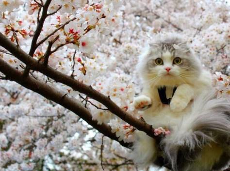 【猫画像】満開!