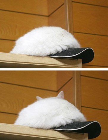 ninja_cat07