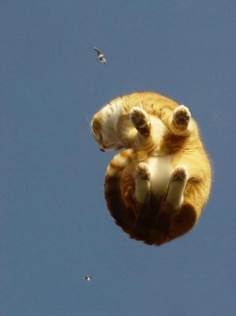【猫画像】浮いてる猫