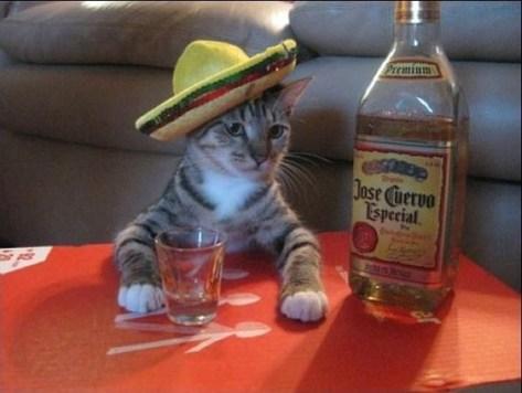【猫画像】今夜はショットで