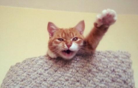 【猫画像】ハイハーイ!